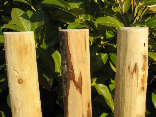 stumpfe Zaunlatten auch einzeln lieferbar